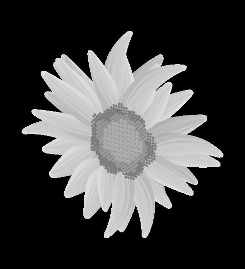 白黒ひまわりのイラスト17