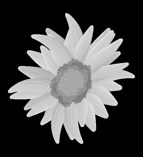 白黒ひまわりのイラスト18