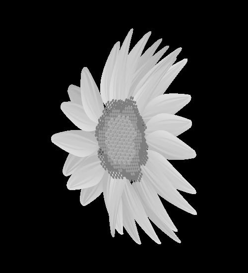 白黒ひまわりのイラスト19