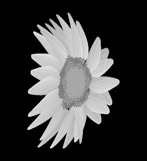 白黒ひまわりのイラスト20