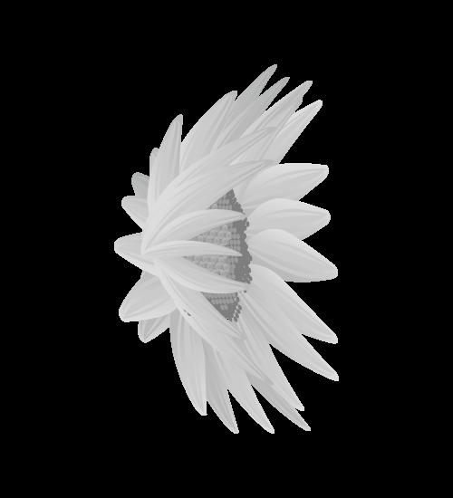 白黒ひまわりのイラスト21