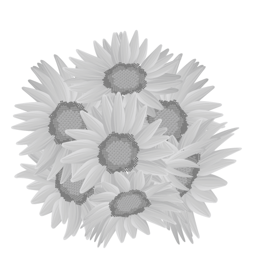 白黒ひまわりのイラスト23