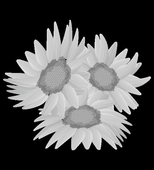 白黒ひまわりのイラスト24