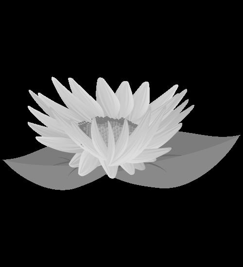 白黒ひまわりのイラスト26