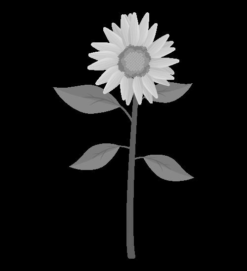白黒ひまわりのイラスト28