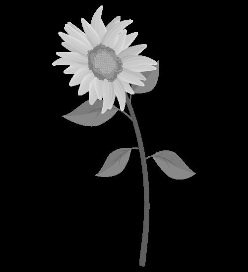 白黒ひまわりのイラスト29