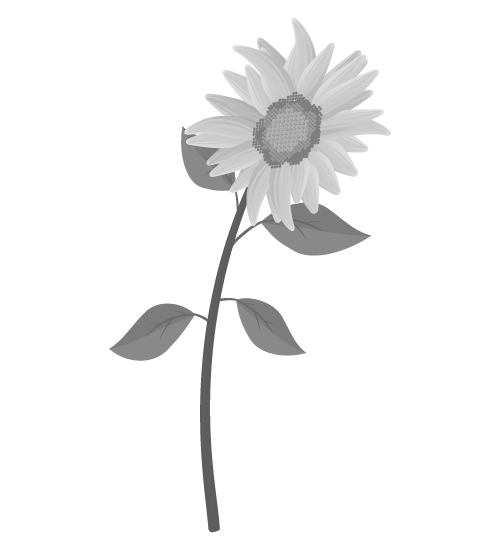 白黒ひまわりのイラスト30
