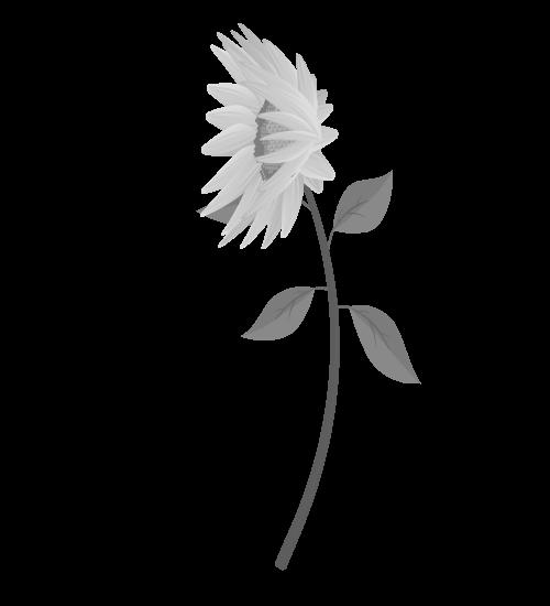 白黒ひまわりのイラスト31