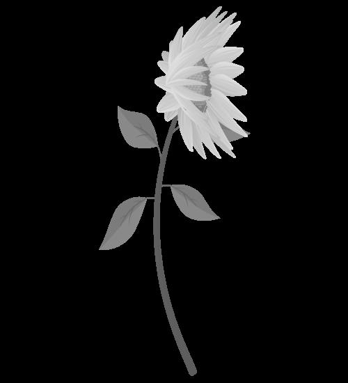 白黒ひまわりのイラスト32