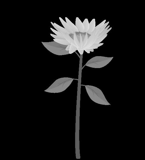 白黒ひまわりのイラスト33