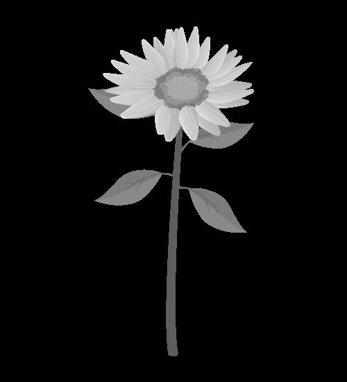 白黒ひまわりのイラスト34