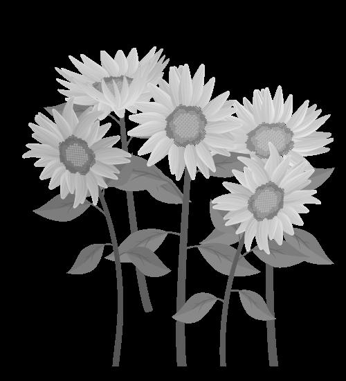 白黒ひまわりのイラスト35