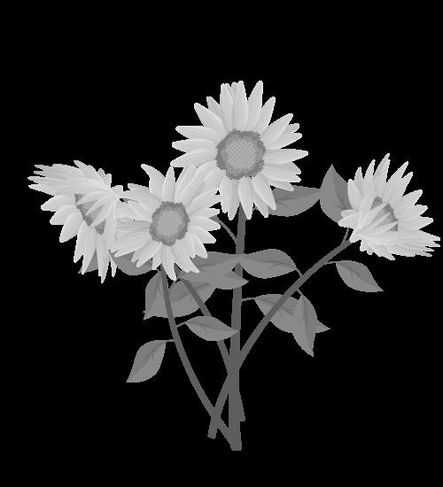 白黒ひまわりのイラスト36