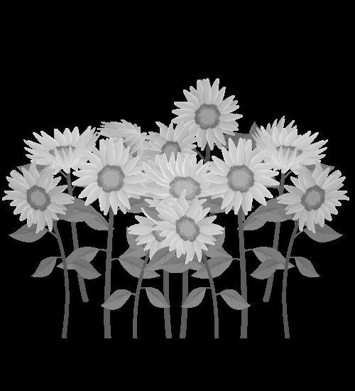 白黒ひまわりのイラスト37
