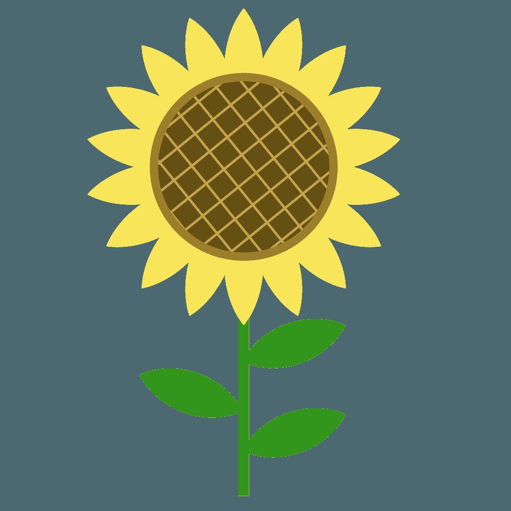 ひまわりと葉っぱと茎イラスト