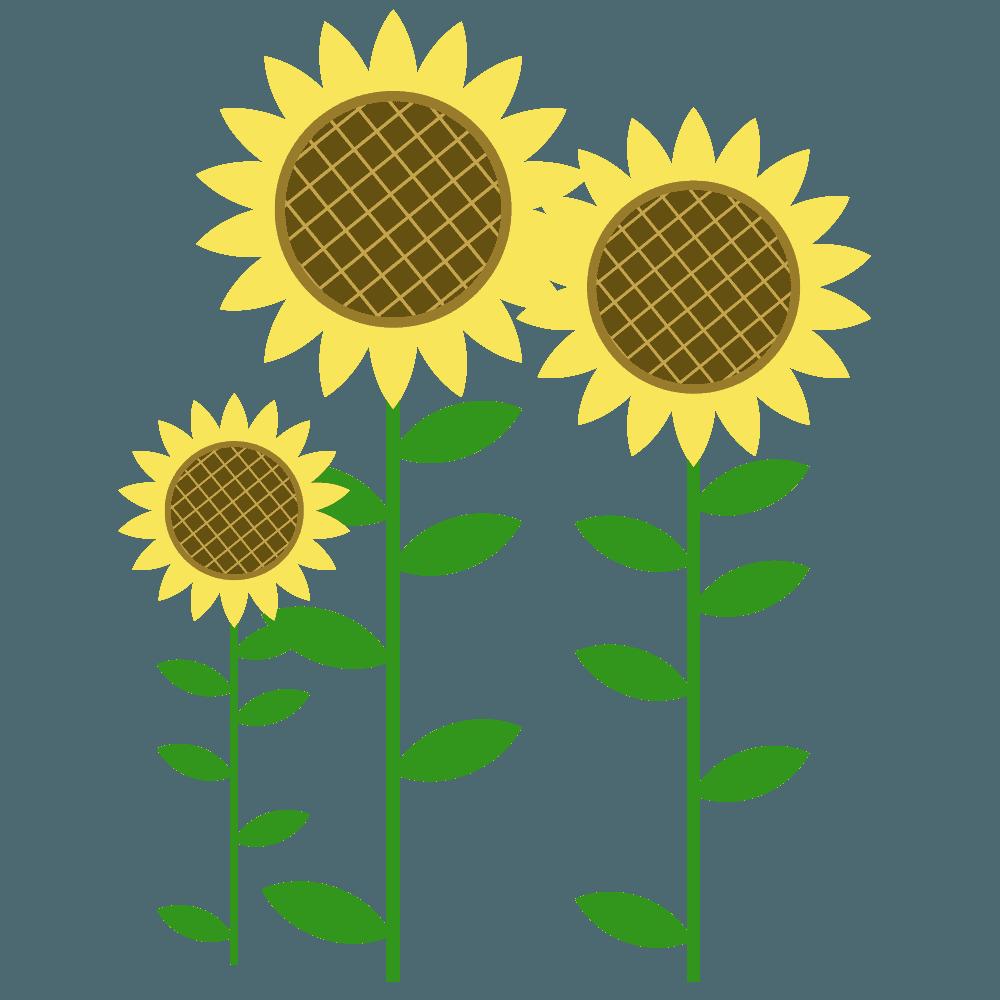 咲き乱れるひまわりイラスト