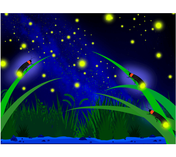 幻想的な蛍と水辺の星空のイラスト