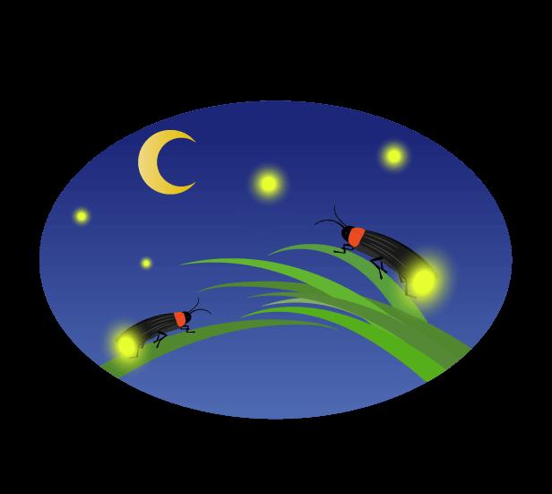 水辺の夜空と蛍の群れのイラスト