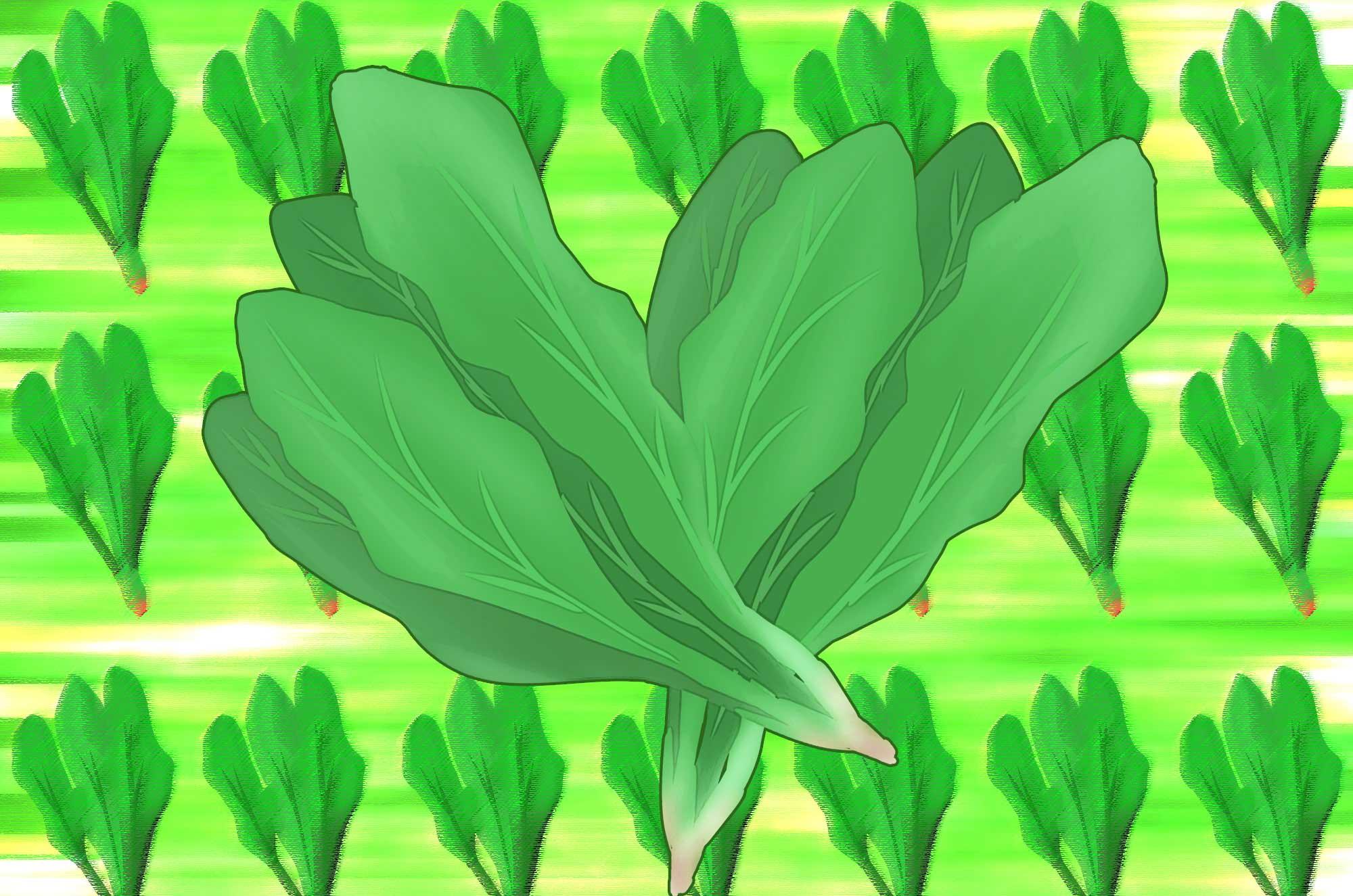ほうれん草イラスト - かわいい緑の野菜の無料素材