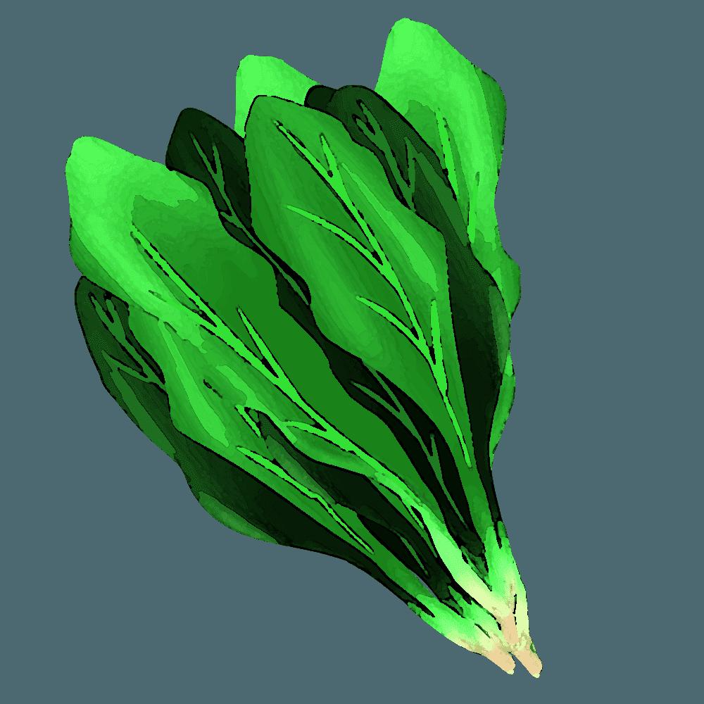 水彩のほうれん草イラスト