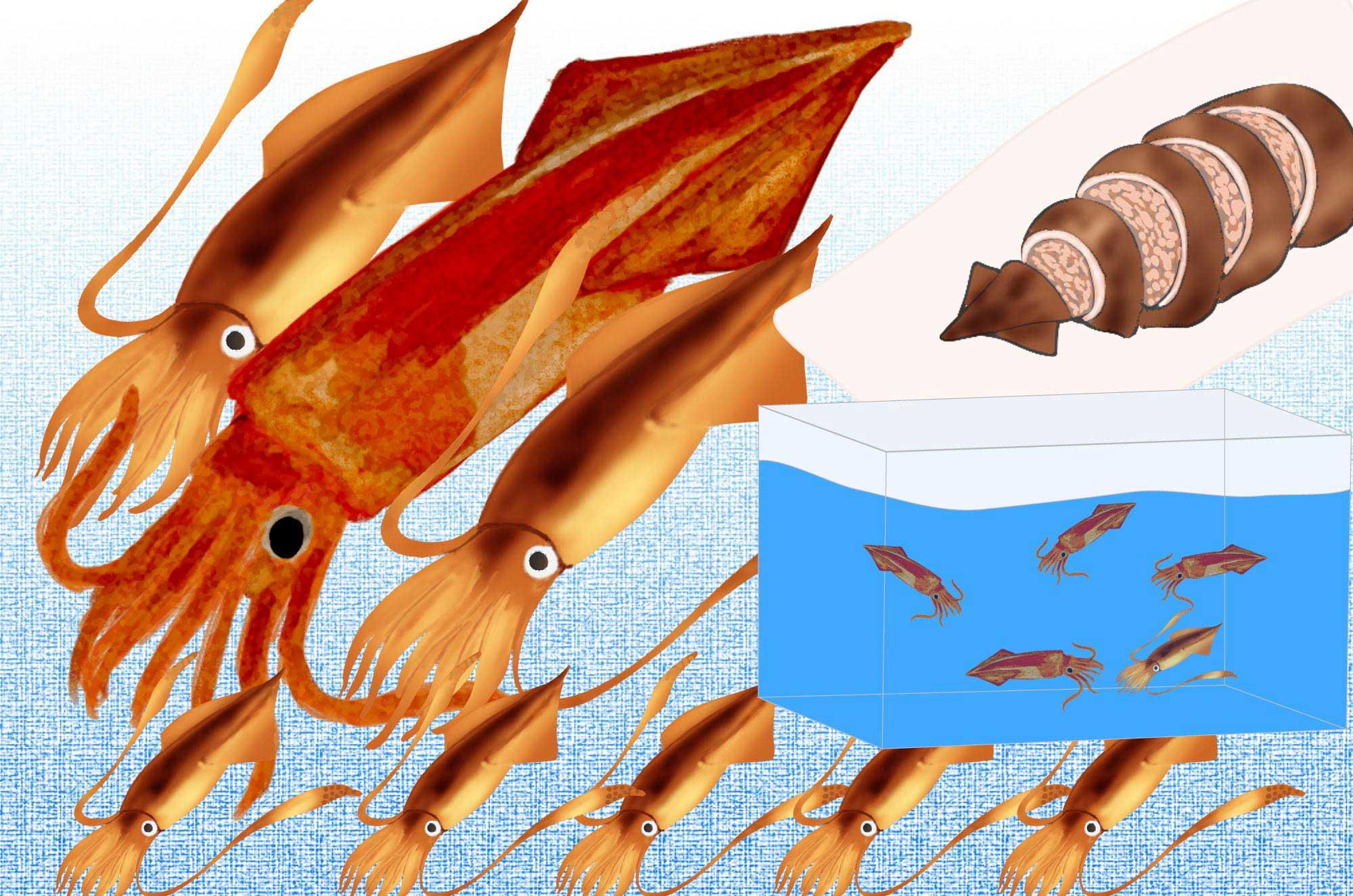 イカの無料イラスト素材 - 料理や可愛いキャラクターも