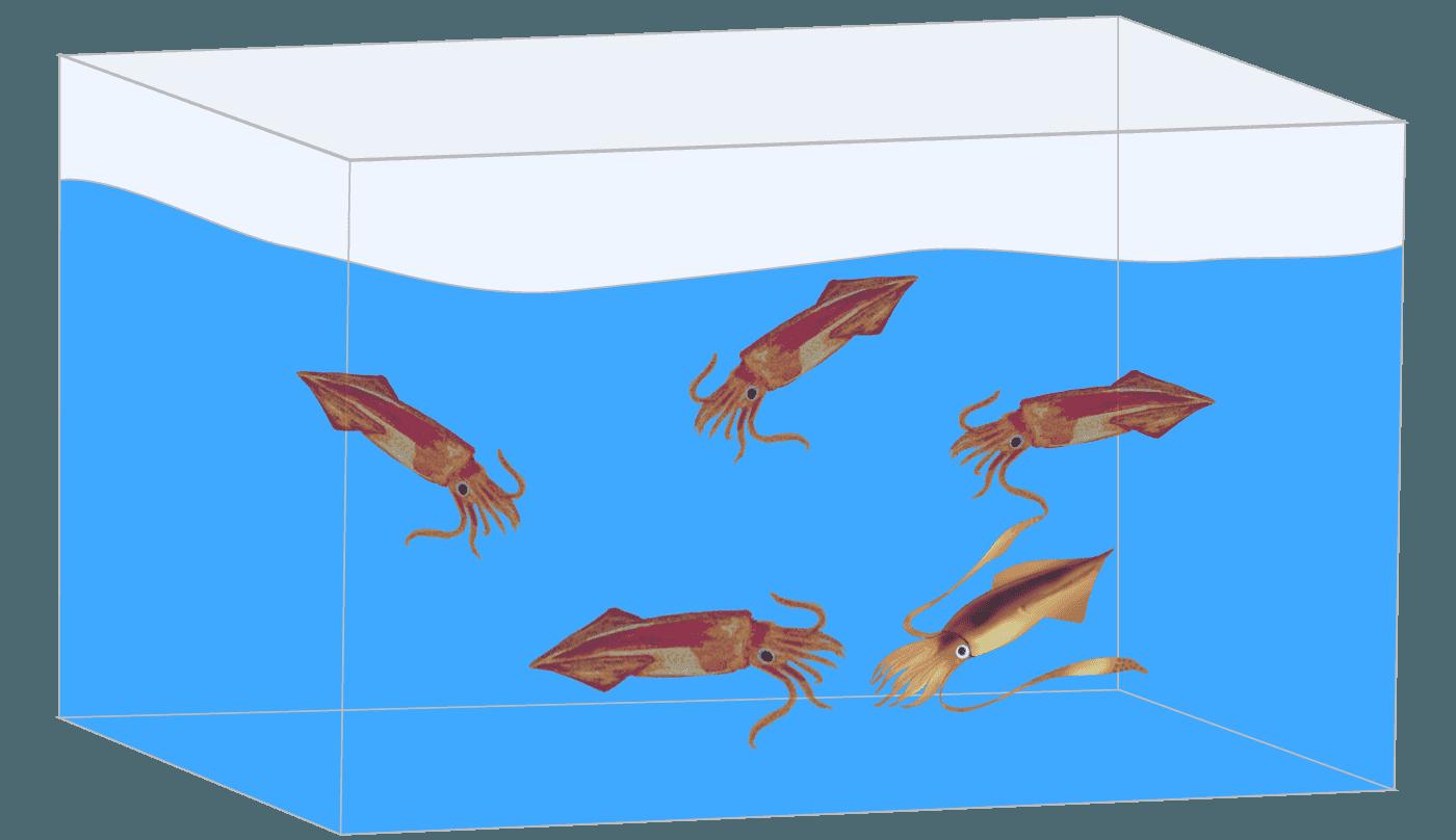 いけすの中を泳ぎまわるイカのイラスト