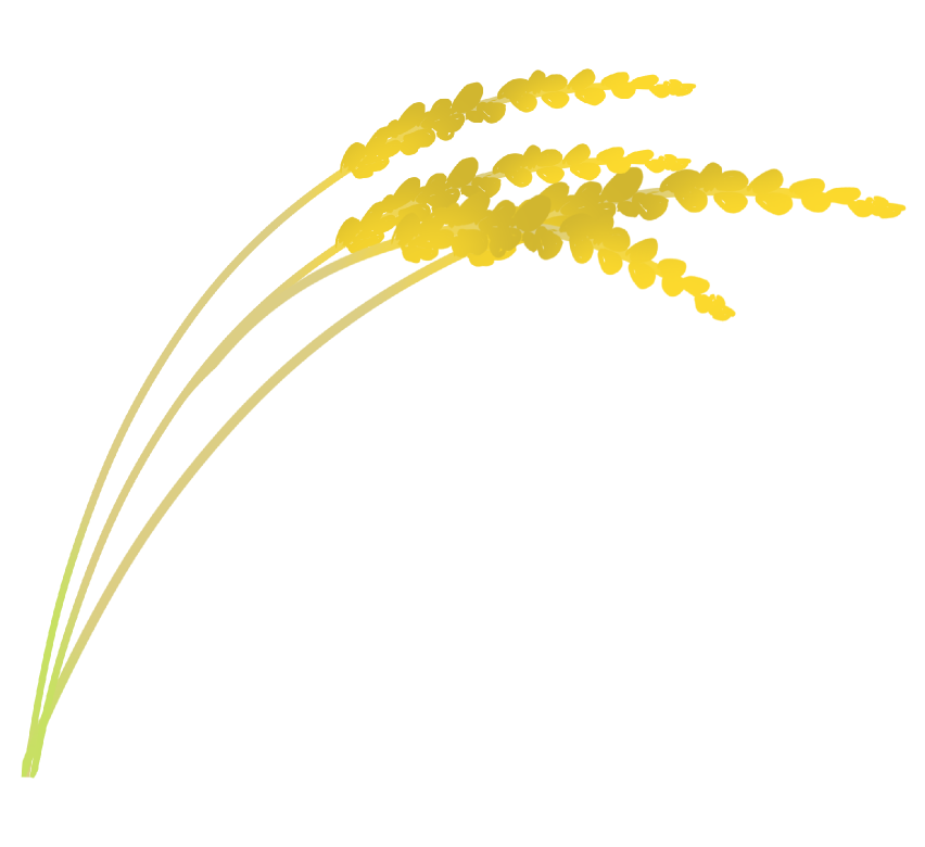 黄金の稲穂のイラスト