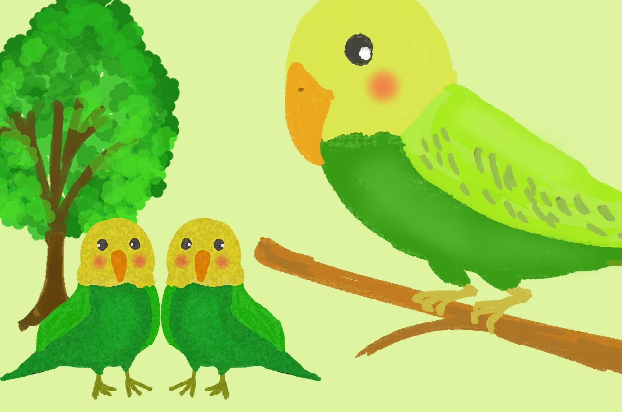 インコイラスト 愛らしくて可愛い鳥のフリー素材集 チコデザ