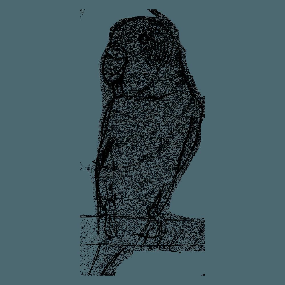 手描きの鉛筆画インコイラスト