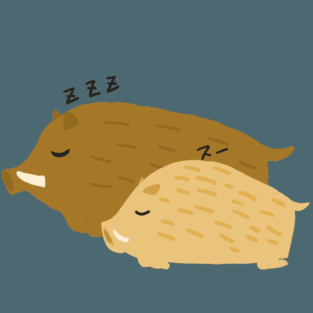 親子で寝るイノシシイラスト