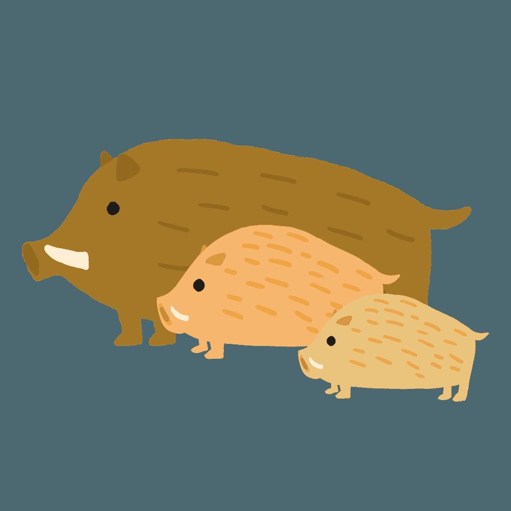 三匹のイノシシの家族のイラスト