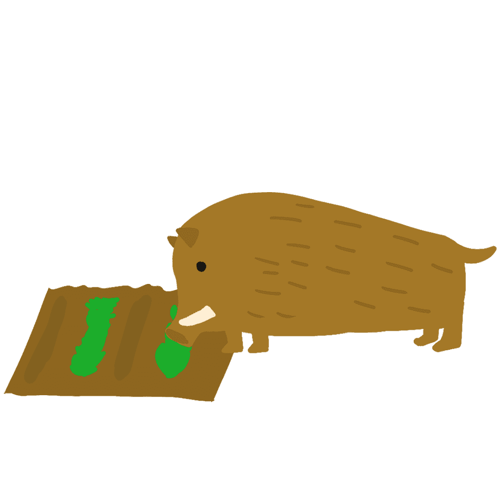 畑を荒らすイノシシイラスト