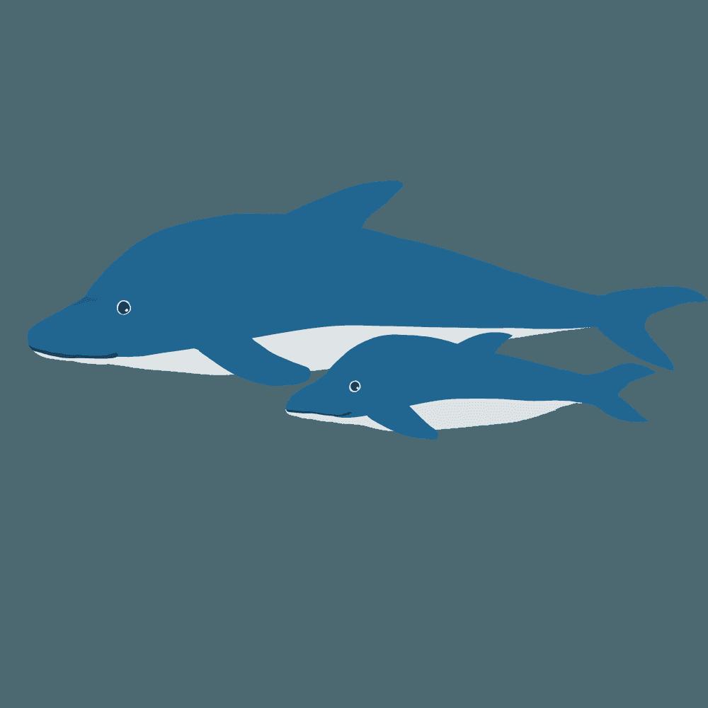 優雅に泳ぐイルカの親子のイラスト
