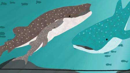 ジンベエザメのイラスト - 水族館で優雅に泳ぐ無料魚素材
