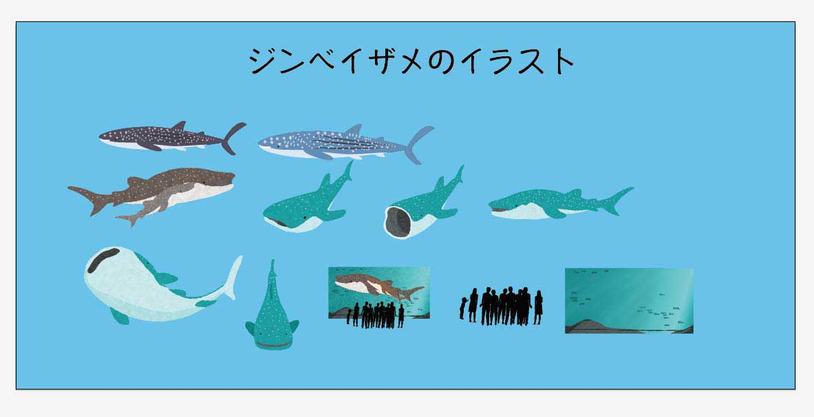 ジンベエザメのベクターイラスト素材