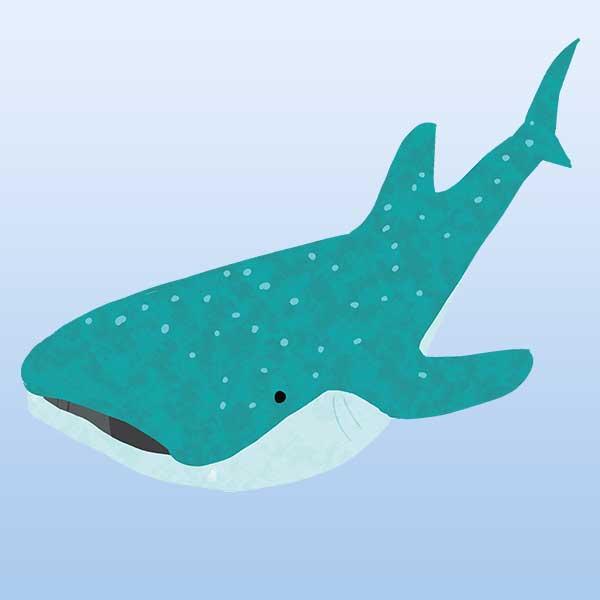 ジンベイザメの高解像度png素材