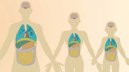 人体イラスト - 男女・子供、体のイメージ無料素材