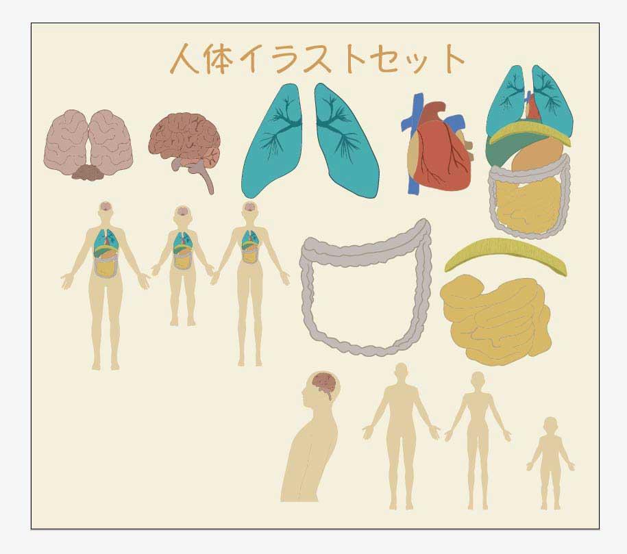 人体のベクターイラスト素材ベクター形式