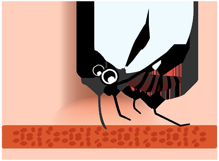 血を吸う蚊のイラスト