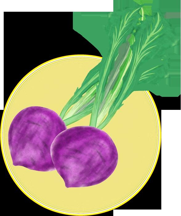 紫色のかぶのイラスト
