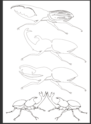 カブトムシのイラストを使った塗り絵