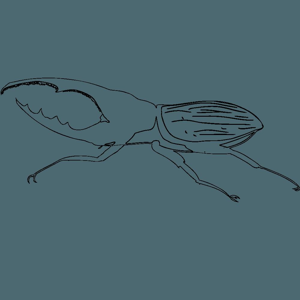 ヘラクレスカブトの塗り絵