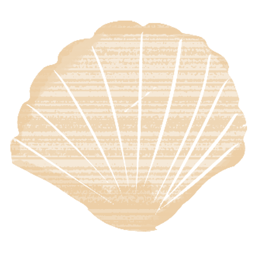 可愛いホタテの貝殻イラスト