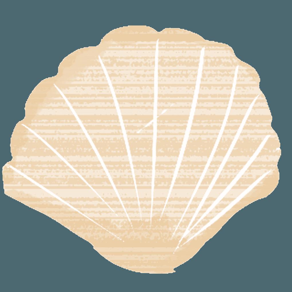 ホタテの貝殻イラスト