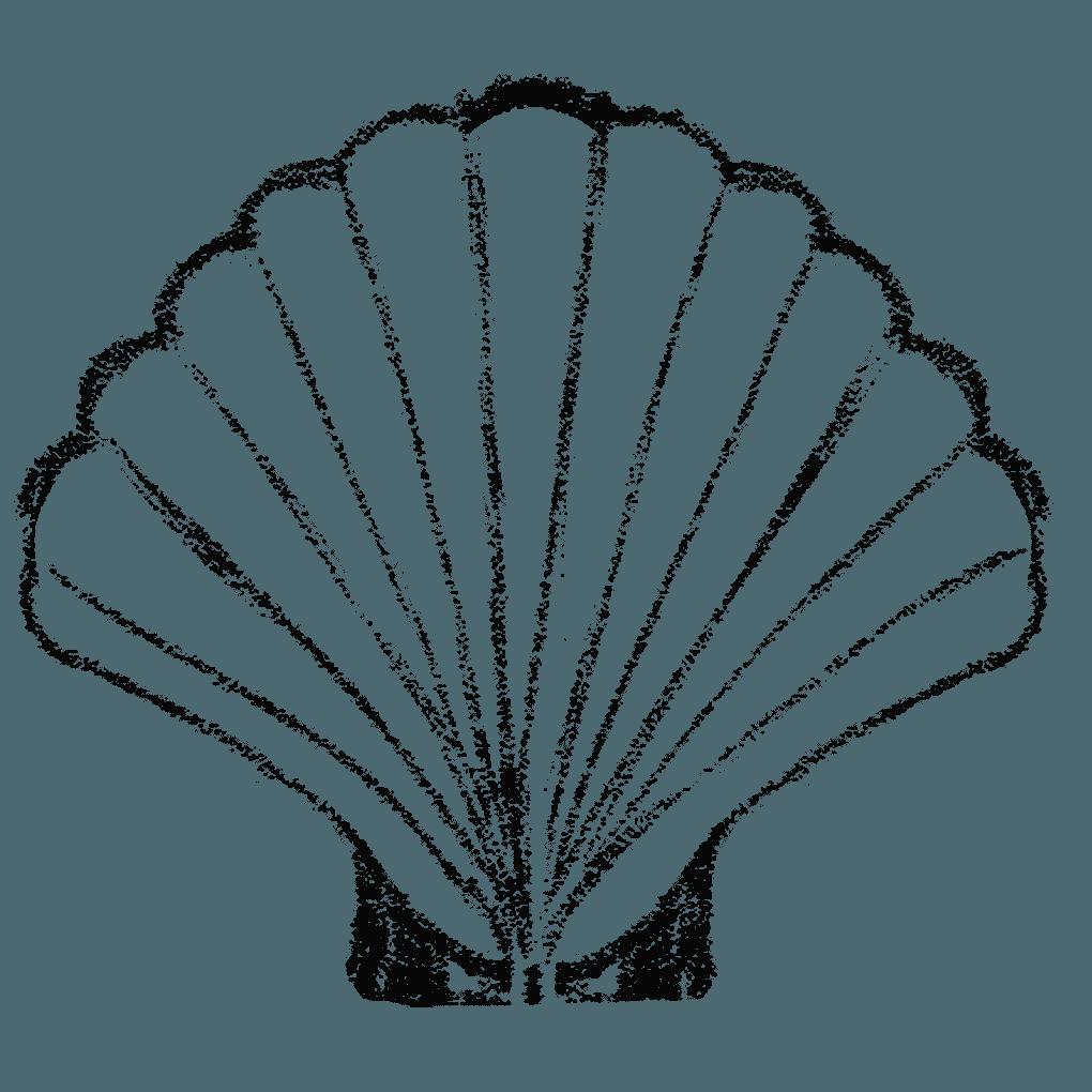 鉛筆で描いた貝殻イラスト