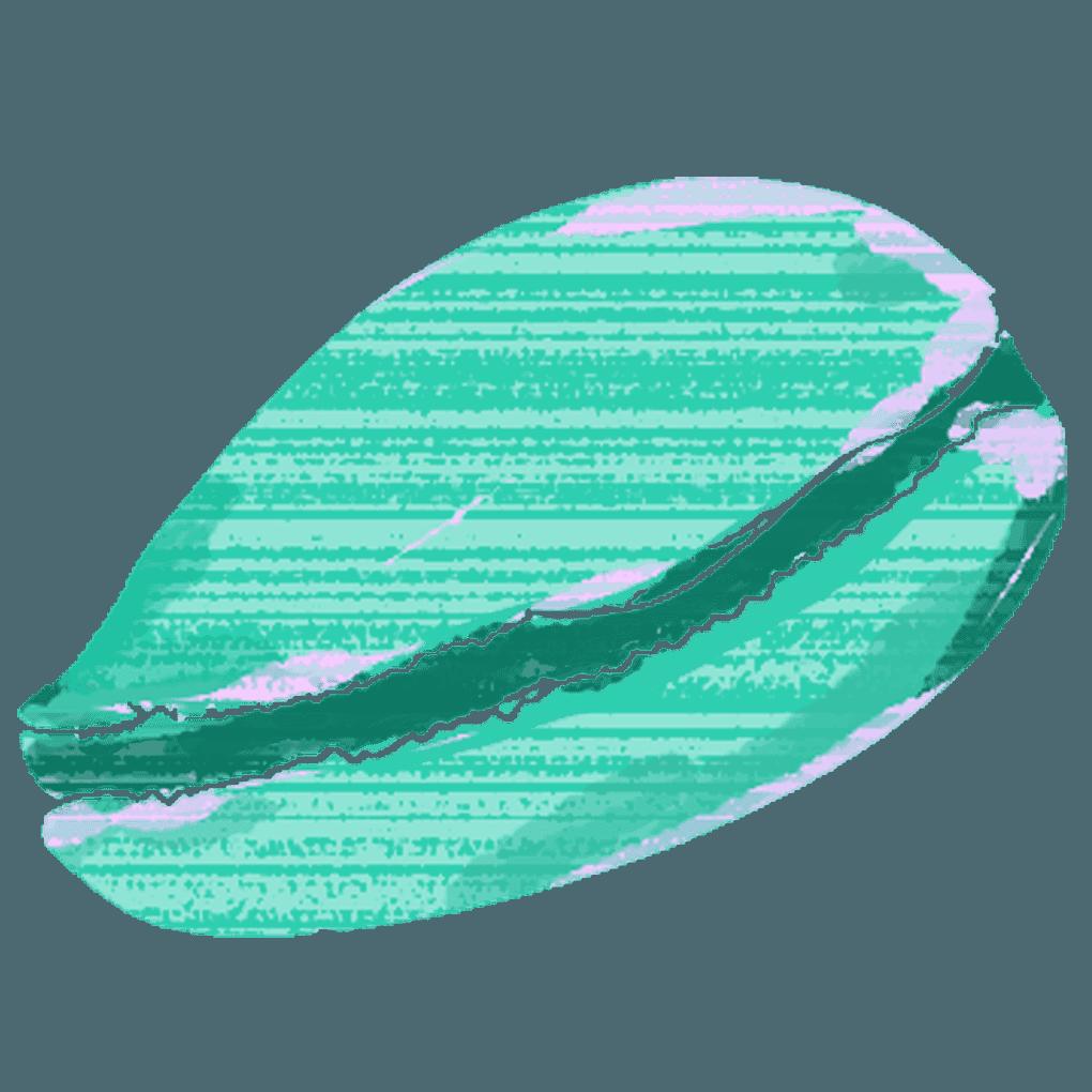 タカラガイの貝殻のイラスト