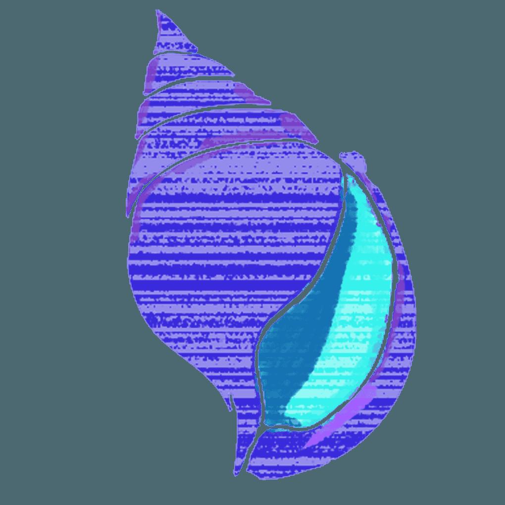 神秘的なマキガイの貝殻イラスト