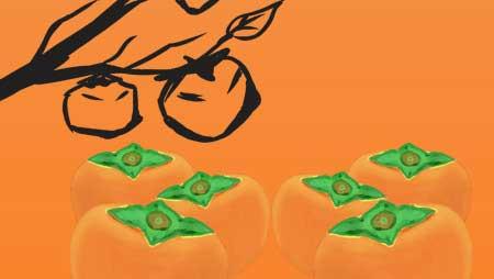 柿イラスト - ベクター・手描き・かわいい果物無料素材