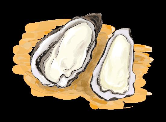 牡蠣の挿絵のイラスト