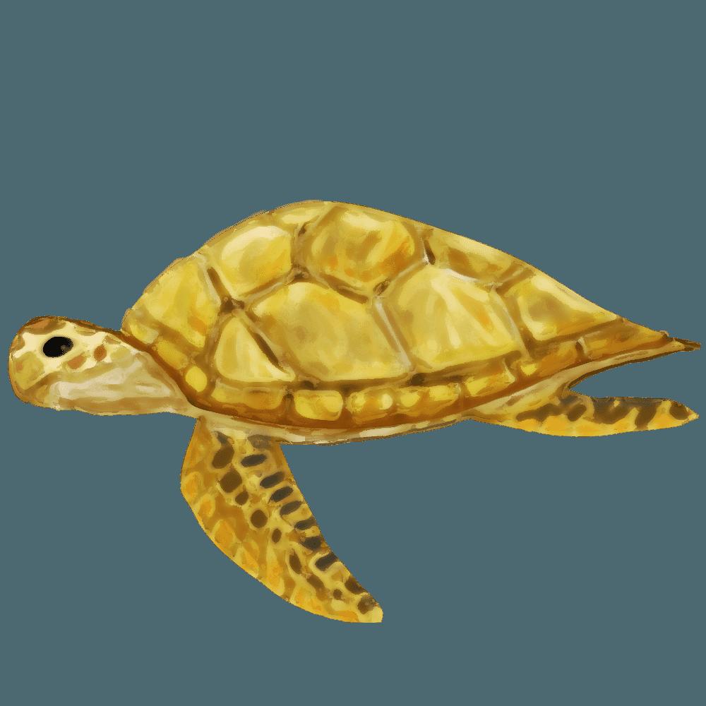 リアルなウミガメのイラスト